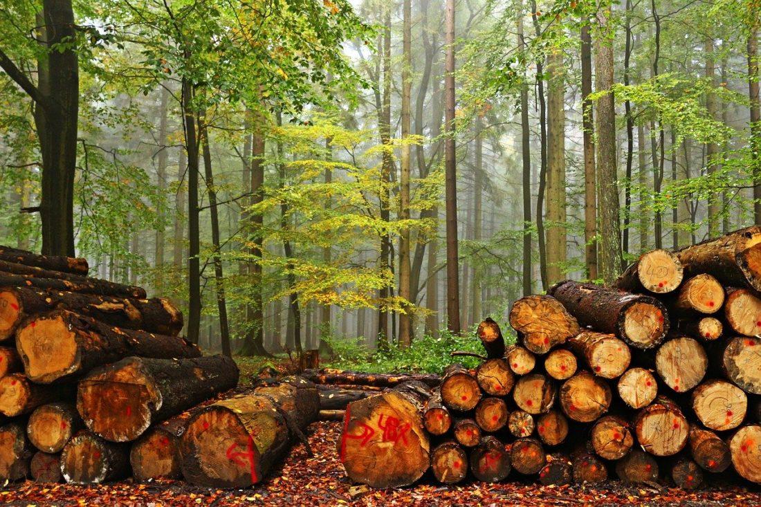 La Certificacion de la Cadena de Custodia en la madera